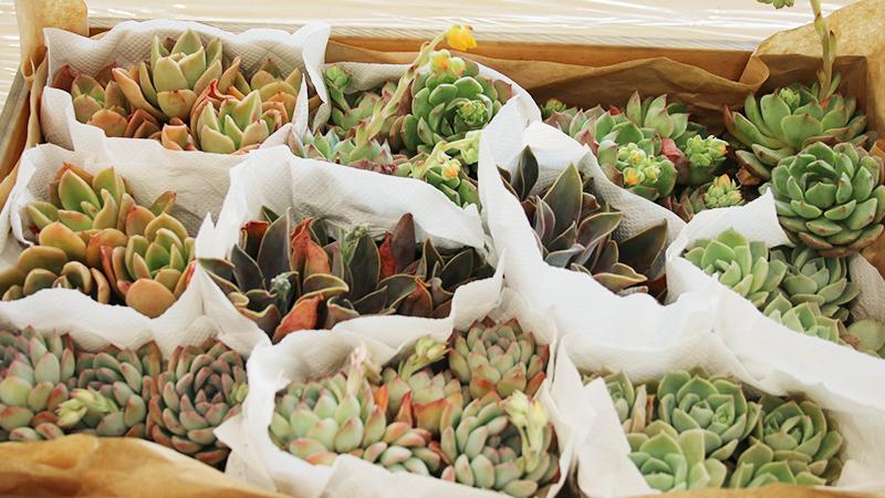 レクサス多摩店にて多肉植物の寄せ植え教室開催